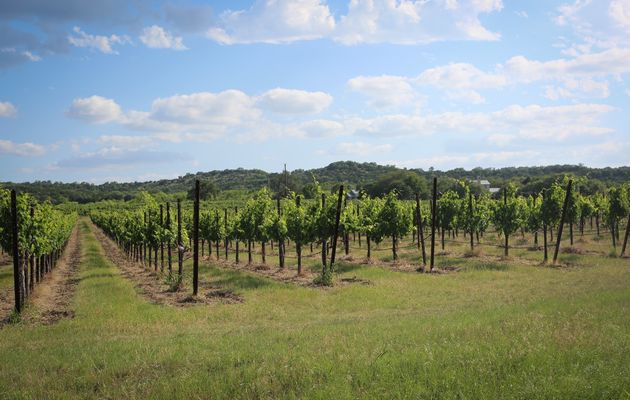 Spicewood Vineyards